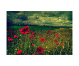 Poppy Love Photographic Print by J A Evans