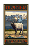 Glacier National Park Elk Pal 1549 Photographic Print by Paul A Lanquist