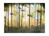 Forest Harmony Photographic Print by Herb Dickinson