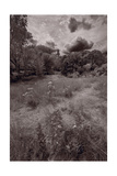 Gross Point Beach Grasses BW Photographic Print by Steve Gadomski