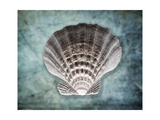 Luminous Scallop Shell Photographic Print by George Oze