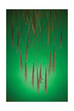 Fountain Grass In Green Photographic Print by Steve Gadomski