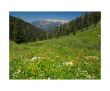 Mile-Long Flower Garden And Alta Peak Photographic Print by Ronald A Dahlquist