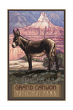 Grand Canyon Burro Pal 379 Photographic Print by Paul A Lanquist