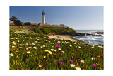 Pigeon Point Spring Vista, California Photographic Print by George Oze