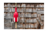 Maine Lobster Shack Photographic Print by Steve Gadomski