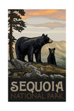 Sequoia Nationa Park Black Bear Family Pal 1209 Photographic Print by Paul A Lanquist