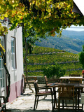 Quinta Nova De Nossa Senhora Do Carmo Estate in Northern Portugal in the Renowned Douro Valley Prints by Camilla Watson