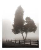 Cedar Tree and Fence Art by Nicholas Bell