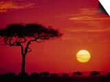 Wildebeest Migration, Masai Mara, Kenya Posters by Dee Ann Pederson