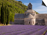Rows of Lavender, Abbaye De Senanque, Gordes, Luberon, Provence, France Prints by Brian Jannsen