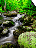 Creek Flows Through Forest, Shenandoah National Park, Virginia, USA Prints by Jay O'brien
