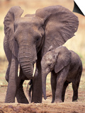 African Elephants, Tarangire National Park, Tanzania Posters by Art Wolfe