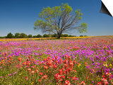 Spring Mesquite Trees Growing in Wildflowers, Texas, USA Posters by Julie Eggers