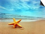 Starfish on the Beach Print by PHOTOCREO Michal Bednarek