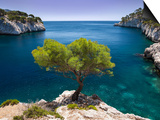 Lone Pine Tree Growing Out of Solid Rock, Calanques Near Cassis, Provence, France Posters by Brian Jannsen