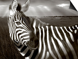 Black & White of Zebra and Plain, Kenya Art by Joanne Williams