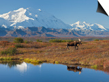 Mt. Mckinley, Denali National Park, Alaska, USA Poster by Hugh Rose