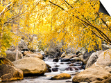 Fall Foliage at Creek, Eastern Sierra Foothills, California, USA Prints by Tom Norring