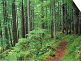 Silver Falls Trail, Mt. Rainier National Park, Washington, USA Prints by Jamie & Judy Wild
