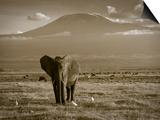 Elephant, Mt. Kilimanjaro, Masai Mara National Park, Kenya Poster von Peter Adams