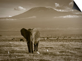 Elephant, Mt. Kilimanjaro, Masai Mara National Park, Kenya Posters by Peter Adams