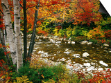 Swift River with Aspen and Maple Trees in the White Mountains, New Hampshire, USA Print by Darrell Gulin