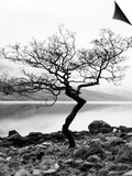 Solitary Tree on the Shore of Loch Etive, Highlands, Scotland, UK Prints by Nadia Isakova