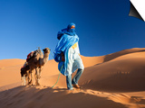 Tuareg Man Leading Camel Train, Erg Chebbi, Sahara Desert, Morocco Art by Peter Adams