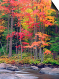 Autumn in the Adirondack Mountains, New York, Usa Posters by Christopher Talbot Frank