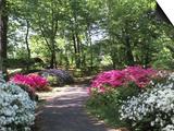 Azalea Way, Botanical Gardens, Bronx, NY Prints by Lauree Feldman