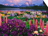 Iris and Lupine Garden and Teton Range at Oxbow Bend, Wyoming, USA Print by Adam Jones