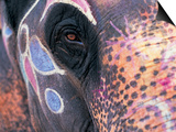 Goa, India, Close-up of Elephants Eye Prints by Peter Adams
