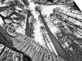 Mountain Biker on Malice in Plunderland Trail, Spencer Mountain, Whitefish, Montana, USA Print van Chuck Haney