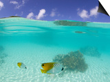 Le Maitai Dream Fakarava Resort, Fakarava, Tuamotus, French Polynesia Plakat autor Michele Westmorland