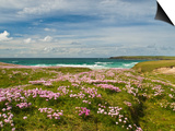 Wild Flowers and Coastline, Isle of Lewis, Outer Hebrides, Sotland, United Kingdom, Europe Poster by John Woodworth