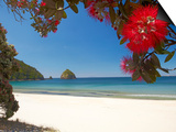 Pohutukawa Tree in Bloom and New Chums Beach, Coromandel Peninsula, North Island, New Zealand Posters by David Wall