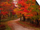 Charles Sleicher - Venkovská cesta na podzim, Vermont, USA Umělecké plakáty