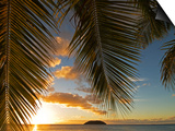 South Pacific, Fiji, Kadavu, Sunset Through Plams from the Beach on Dravuni Island Posters af Paul Harris