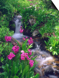 Wildflowers Along Flowing Stream in an Alpine Meadow, Rocky Mountains, Colorado, USA Prints by Christopher Talbot Frank
