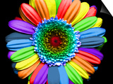 Rainbow Flower Print by Magda Indigo