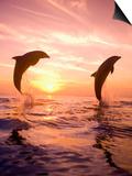 Bottlenose Dolphins, Caribbean Sea Near Roatan, Honduras Prints by Stuart Westmoreland
