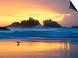 Beach at Sunset with Sea Stacks and Gull, Bandon, Oregon, USA Prints by Nancy Rotenberg