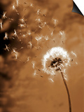 Dandelion Seed Blowing Away Posters by Terry Why