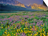 Meadow of Wildflowers in the Many Glacier Valley of Glacier National Park, Montana, USA Prints by Chuck Haney