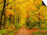 Forest in Autumn, Schoenbuch, Baden-Wurttemberg, Germany, Europe Prints by Jochen Schlenker