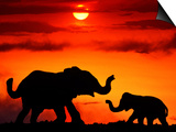 Adult and Young Elephants, Sunset Light Posters by Russell Burden