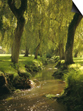 Willow Trees by Forest Stream, New Forest, Hampshire, England, UK, Europe Poster by Dominic Webster