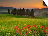 Italy, Tuscany, Siena District, Orcia Valley, Cypress on the Hill Near San Quirico D'Orcia Prints by Francesco Iacobelli