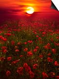 Warm Sunset Posters av Marco Carmassi
